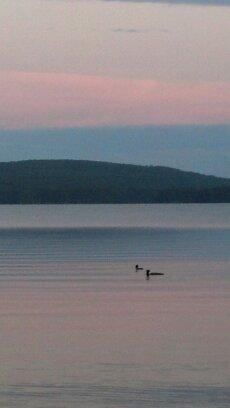 birds on lake at sunset