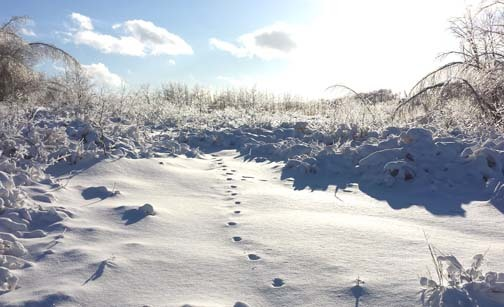 Lonely footsteps in snow