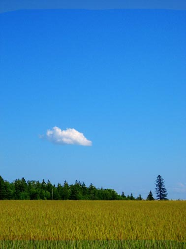 Just one cloud in Prince Edward Island
