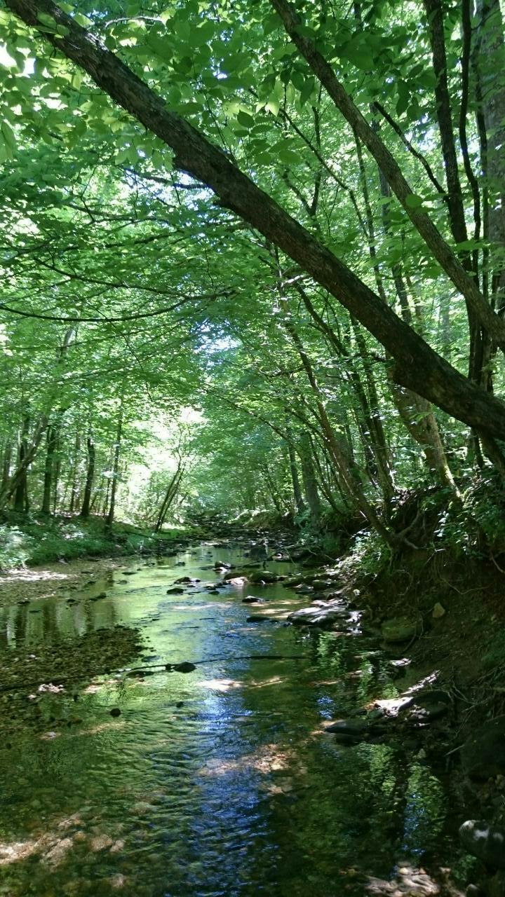 cane creek nature preserve
