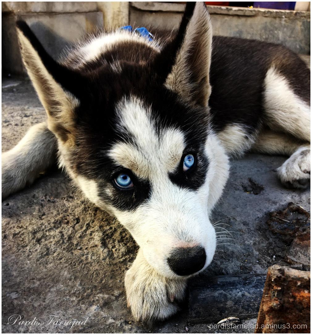 .:Blue Eyes:.