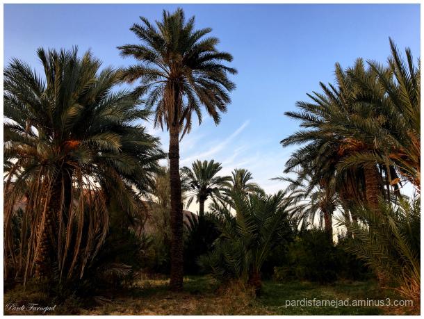 Garmeh Palm Grove