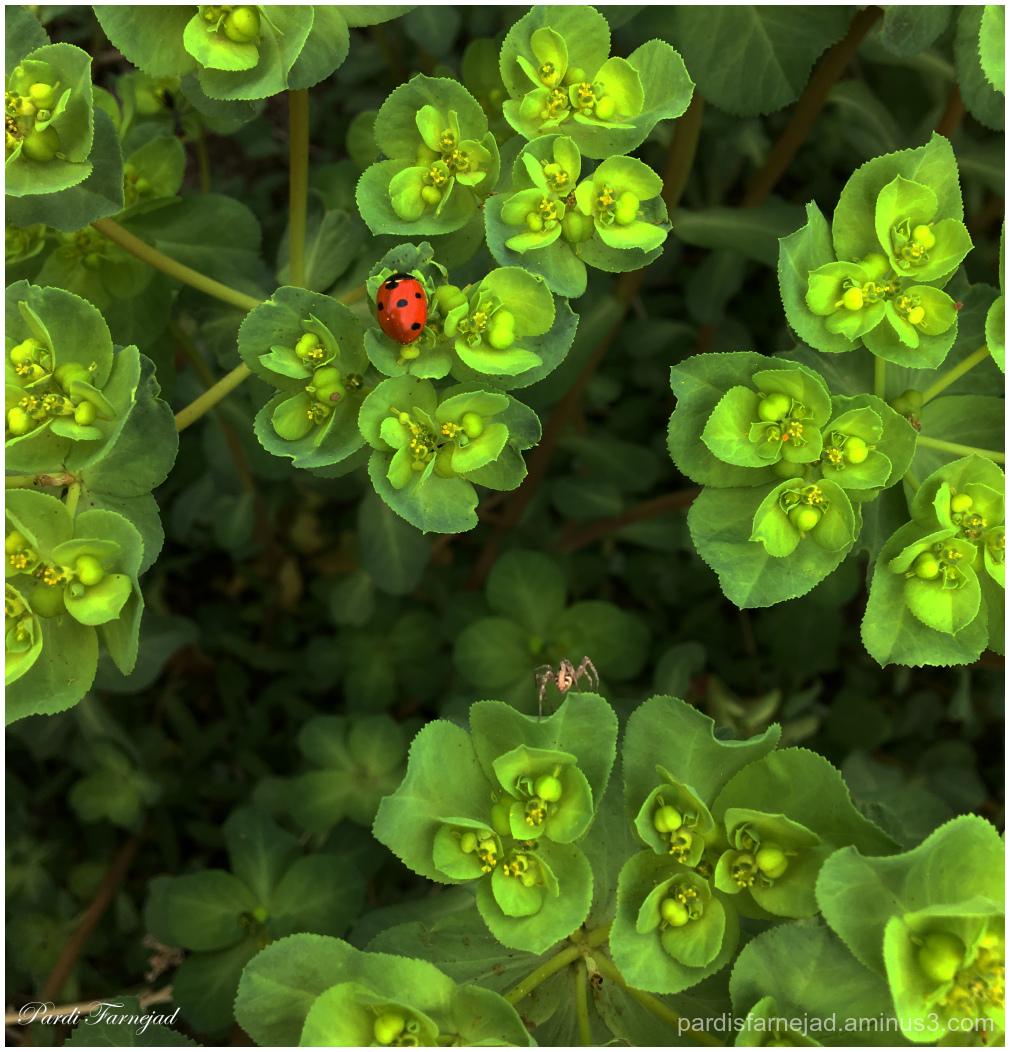 Ladybug & Spider