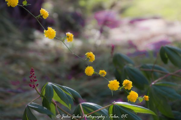 Yellow Green Purple Flowers Garden Park Spring