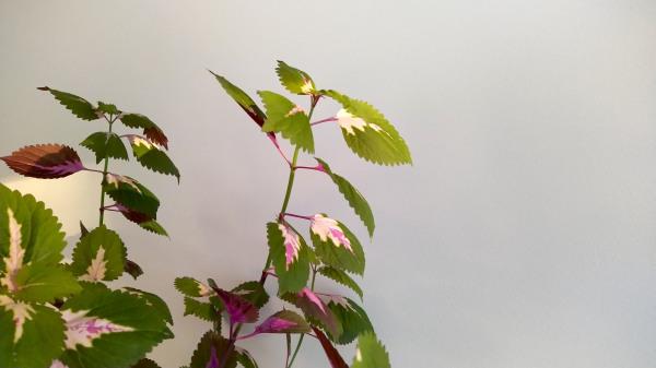 my plant again