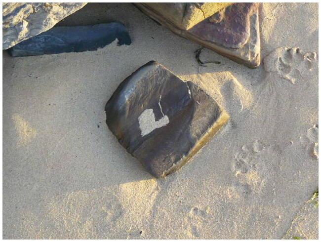 Ocean heart