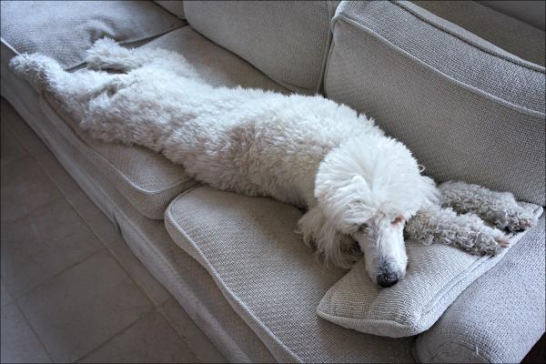 Lazy Abby