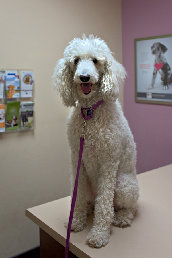 Abby at the Veterinarian...