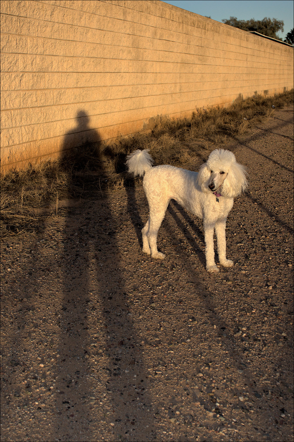 Abby and her shadow...
