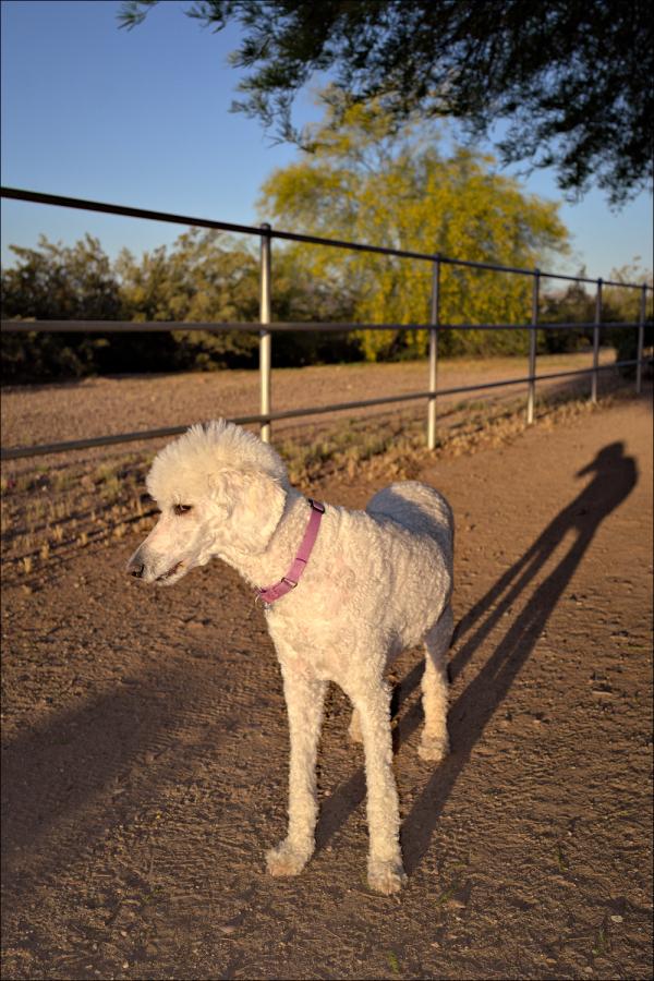 Abby on a sunrise walk earlier today...