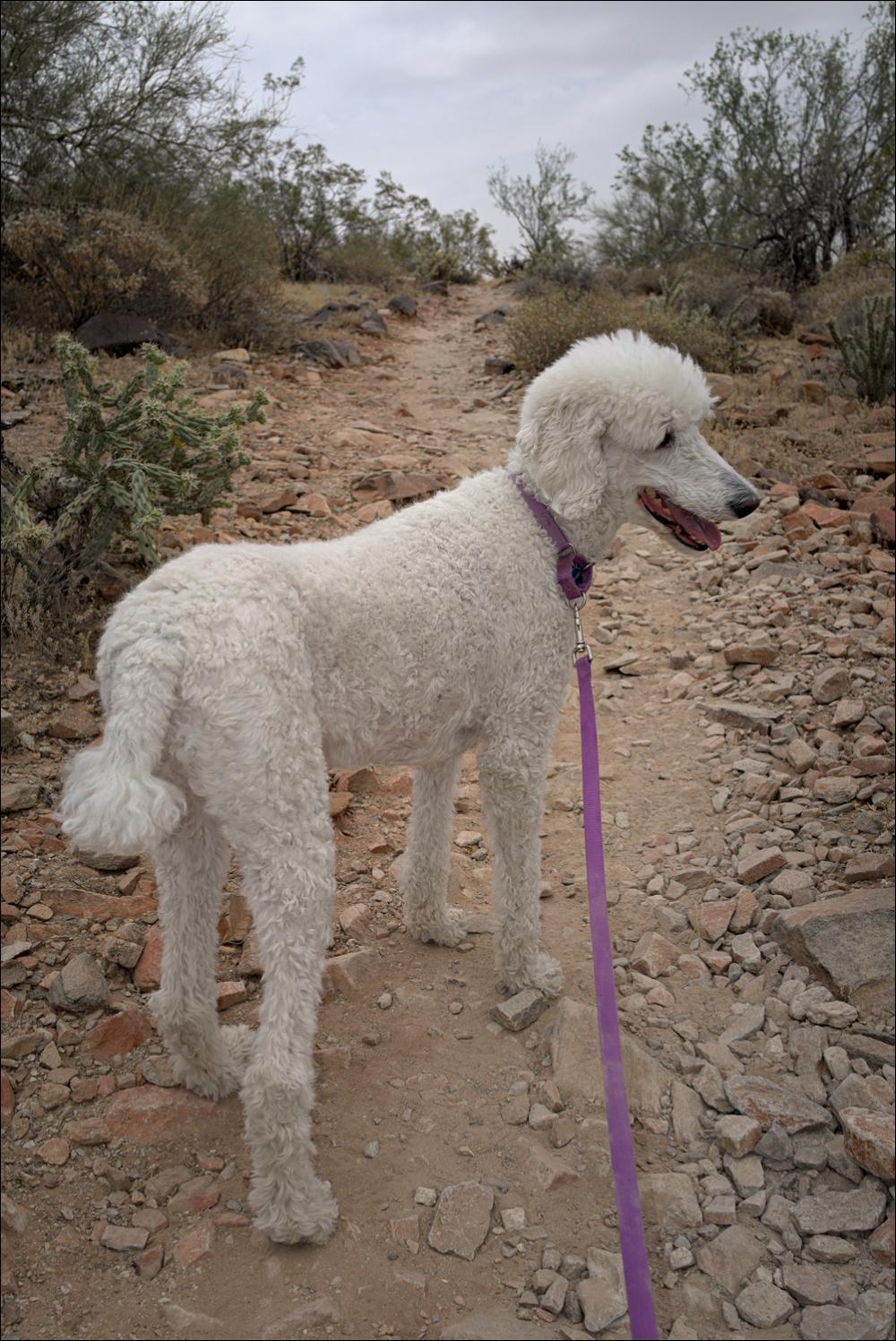 Abby hiking at Lost Dog Wash, No. 2