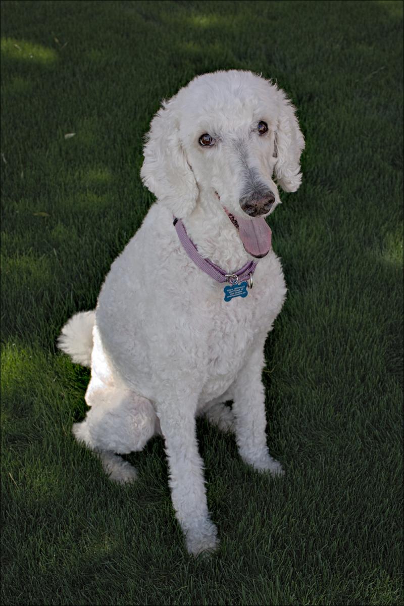Abby sitting pretty...