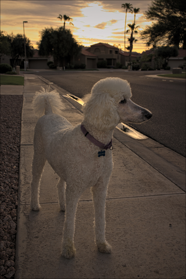 Another sunrise stroll for Miss Abby...