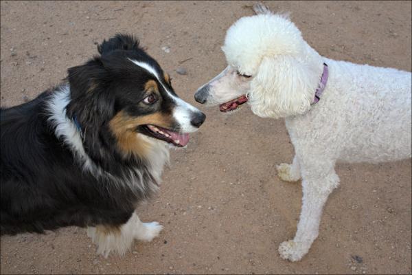Abby meets Pepper...