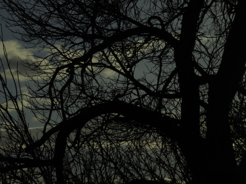 Tree branches in Darkness