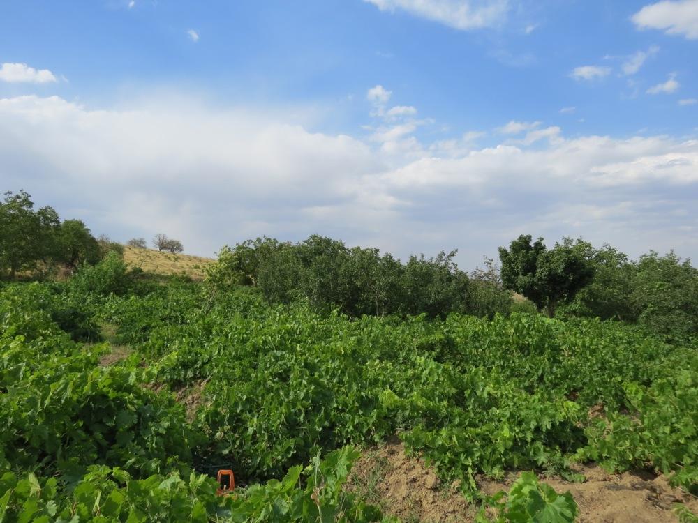 Iraneh, Irane , روستای ایرانه