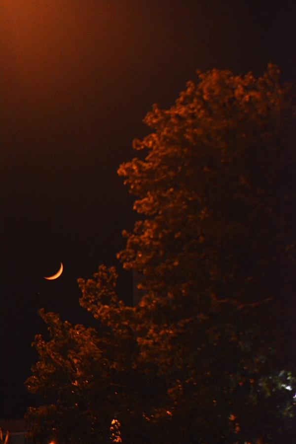 Tree , Moon