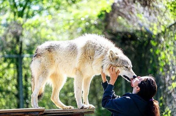 Zahra & The Wolf