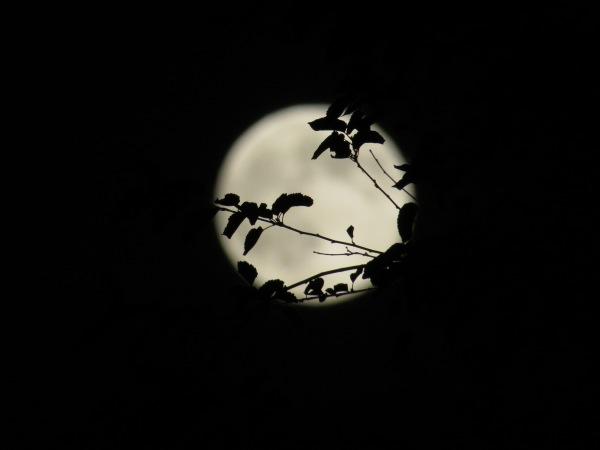 Moon . . .