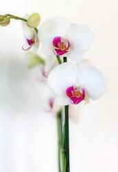 Besoin de fleurs et de douceur...