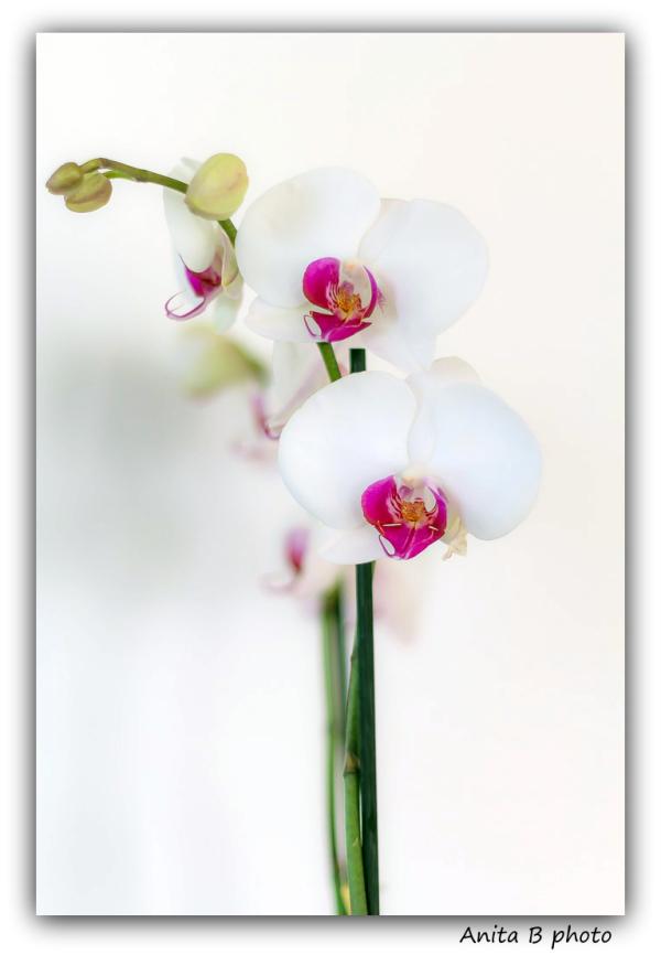 Besoin de fleurs et de douceur....