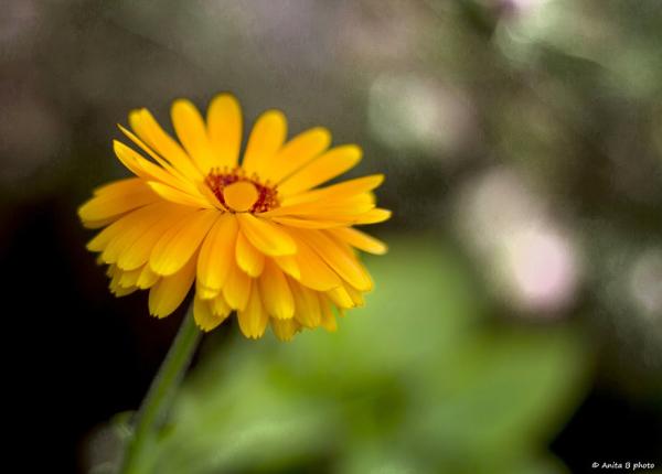 Poésie florale ... 2/2