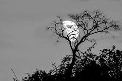 La poésie de la lune!!!