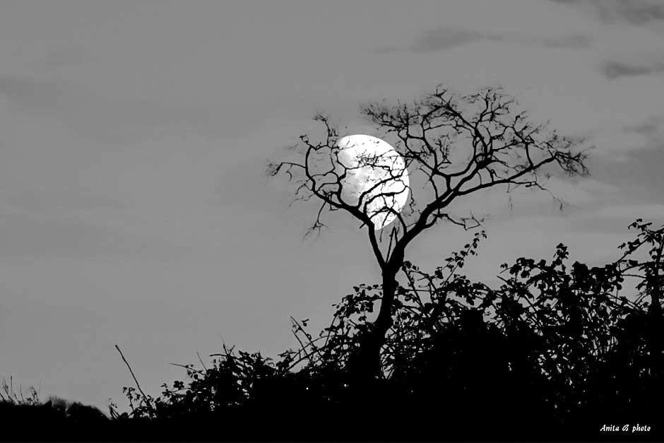 La poésie de la lune...!
