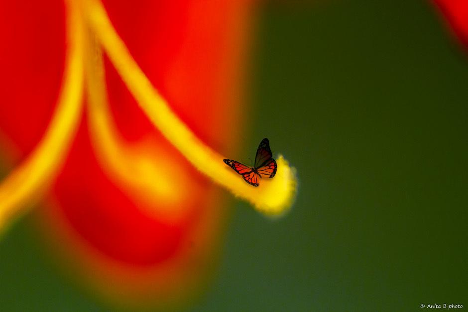 Laissez-moi rêver au creux d'une fleur !