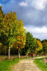 Sur les pas d'un si bel automne 2 ... !