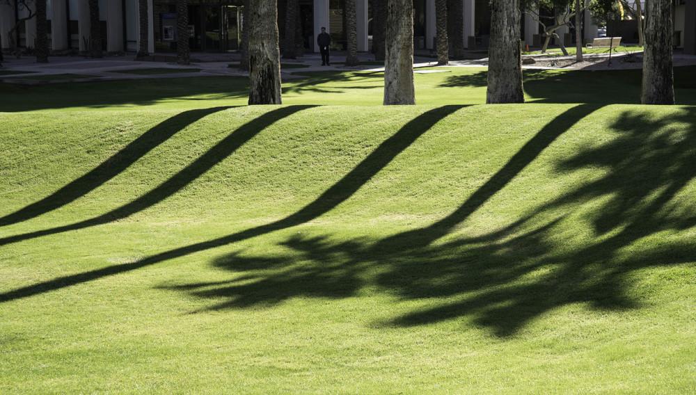 Shadows'n'Lawn