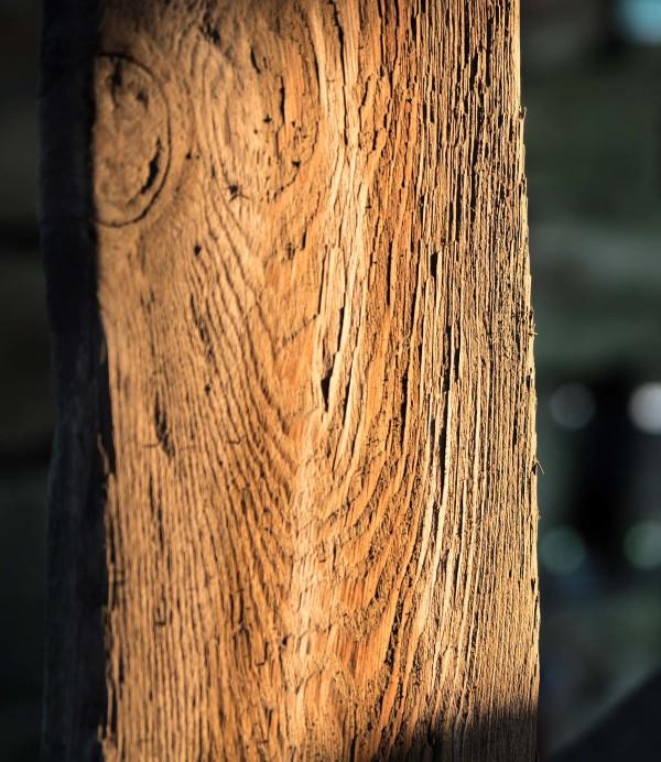 Portrait of Wood