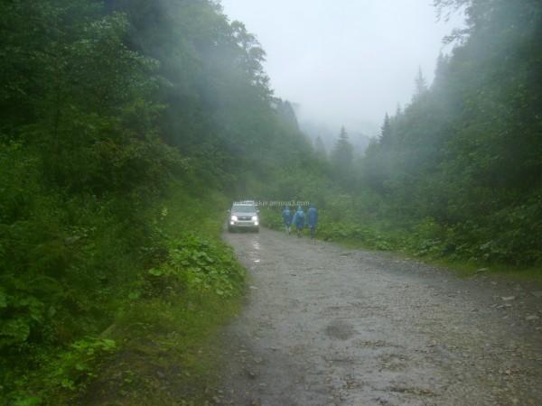 In  Carpatian  forest
