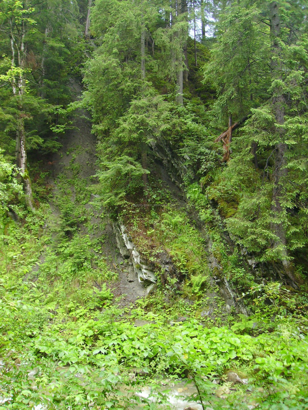 Landslide  in  Carpatian  forest
