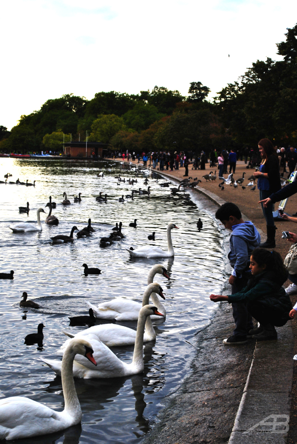 Kids watching the swans, Hyde Park, London