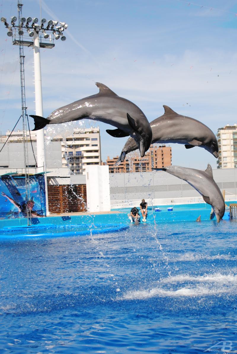 Dolphins, Oceanographic Valencia Aquarium