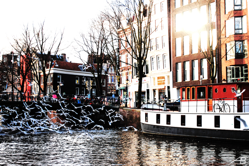 Birds flying, Canal in Amsterdam