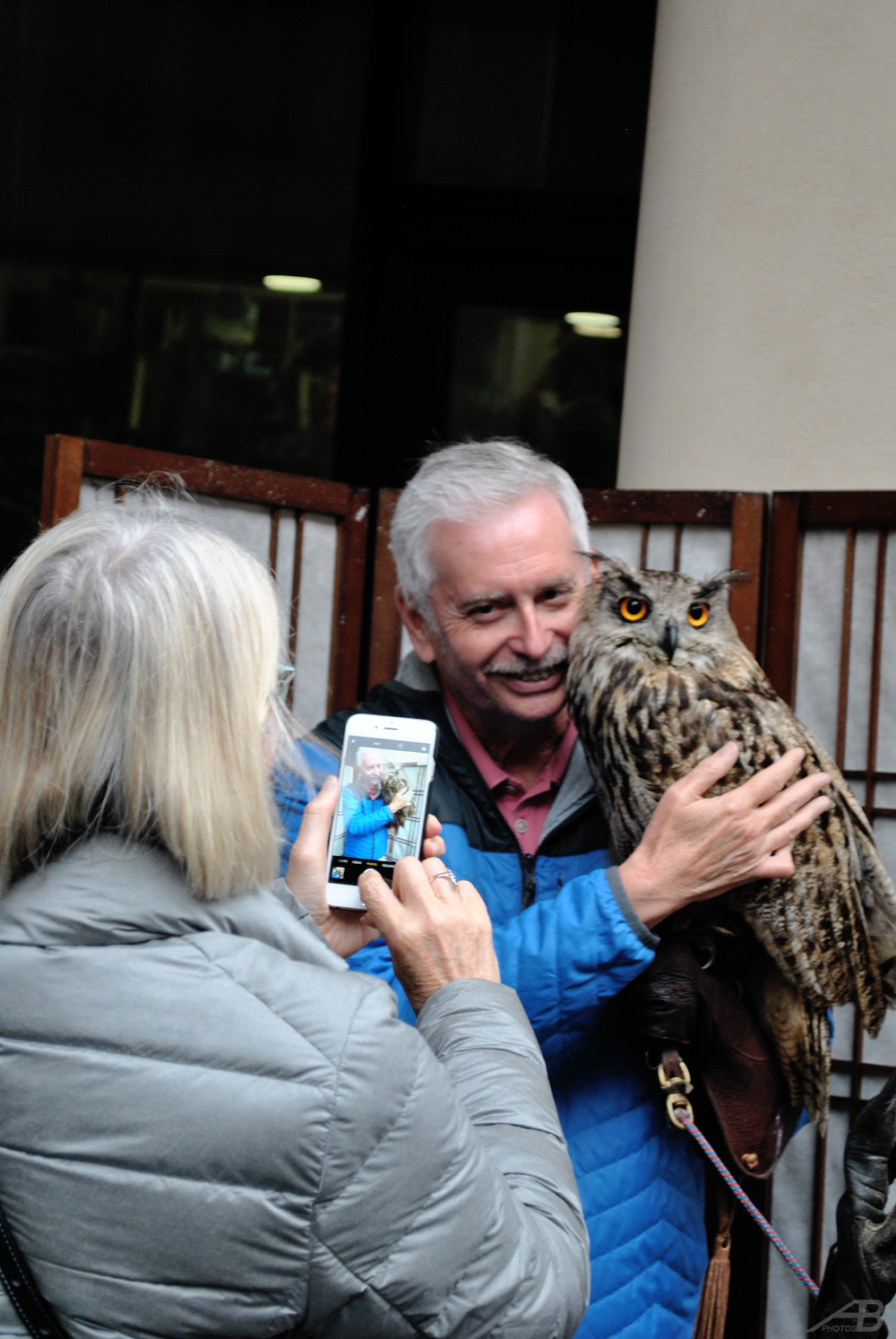 Owl, Edinburgh