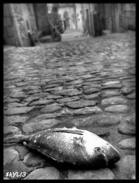 poisson rue insolite