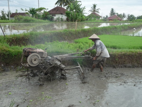 Bankiang Sidem