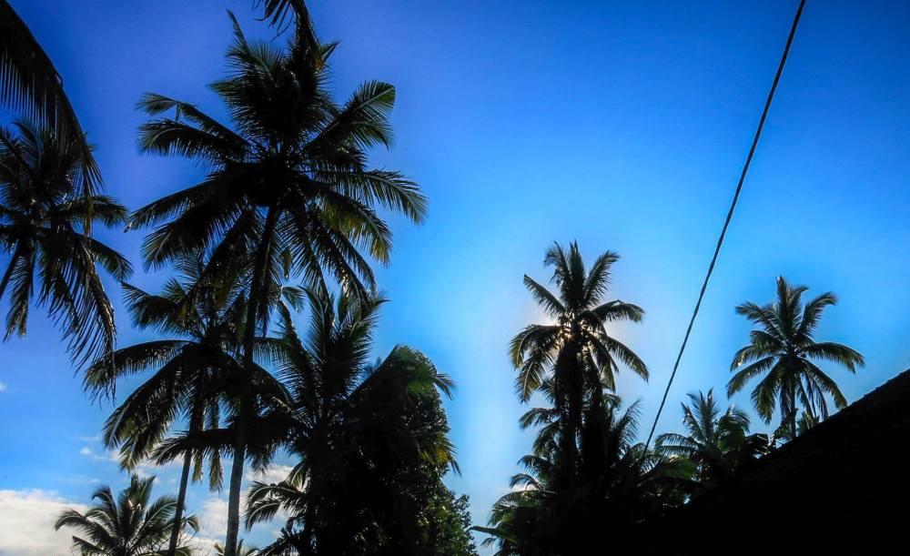 palms love us