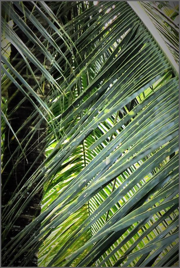 palmsloveus (greens....)