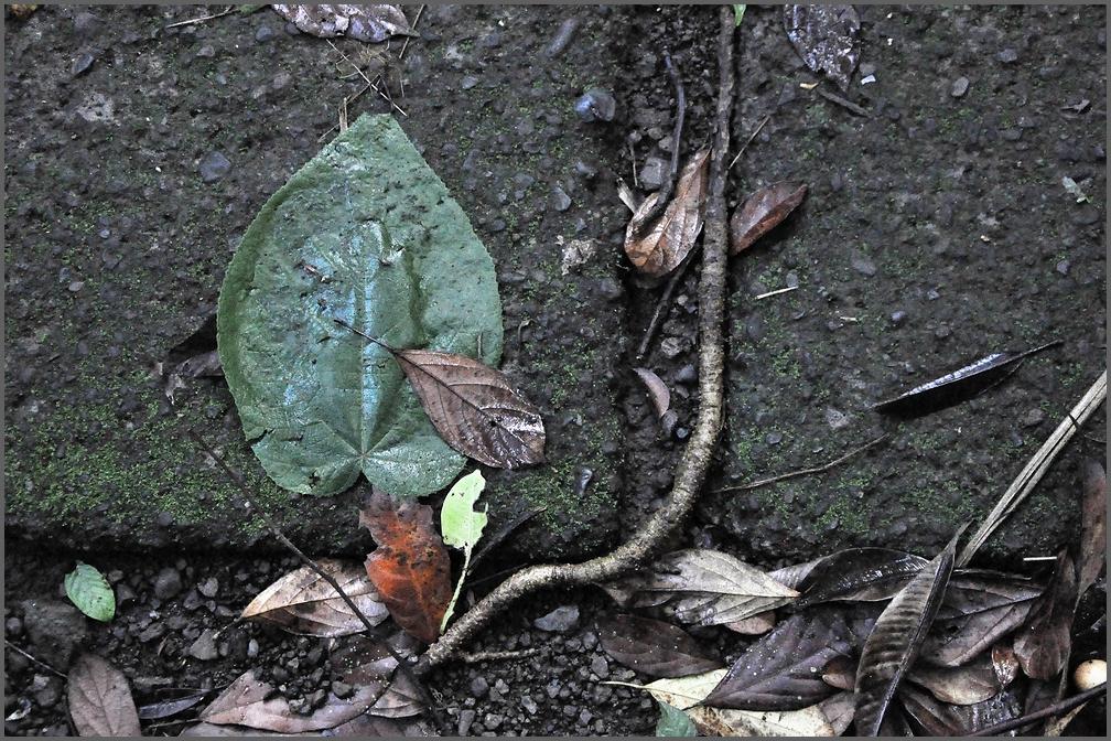 almostevergreen