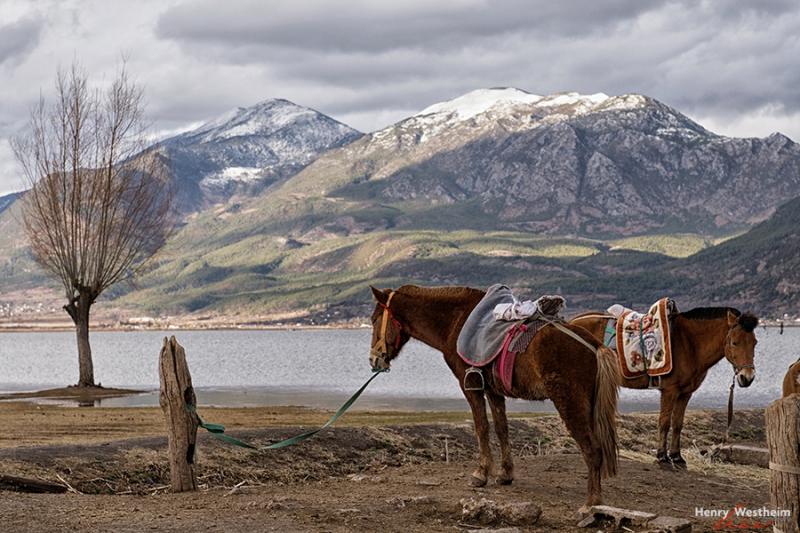 Horses at Lashi Lake, near Lijiang, Yunnan, China