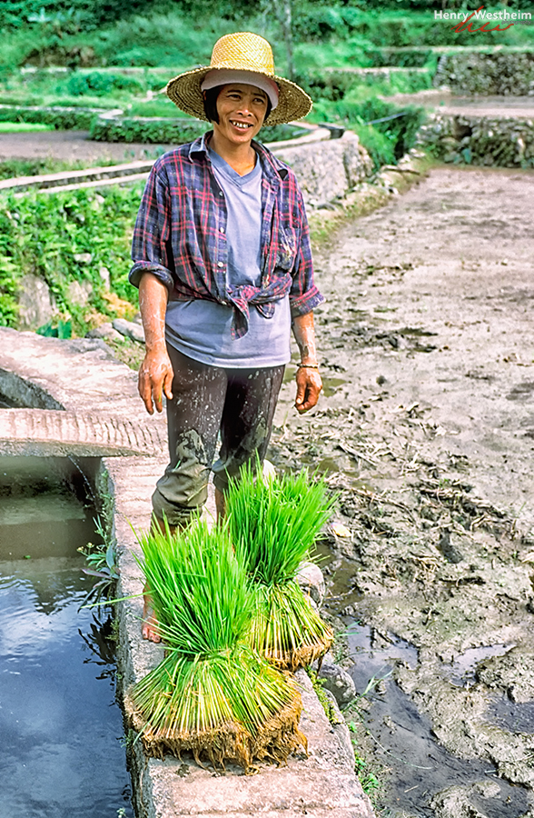 Philippines, Farmer With Rice Seedling Bundle