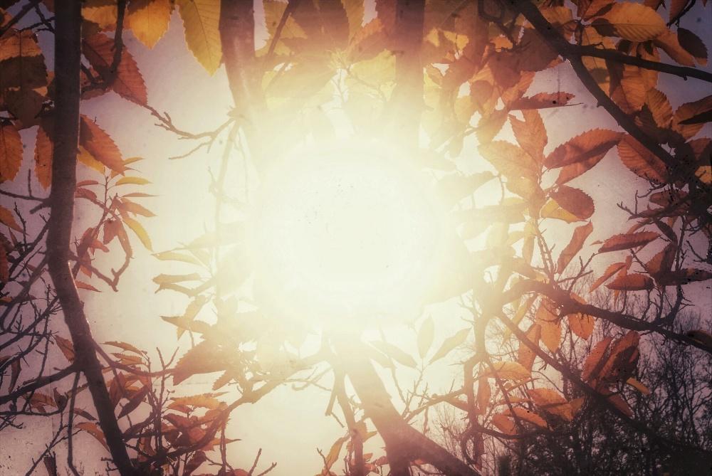 Tardes de otoño...