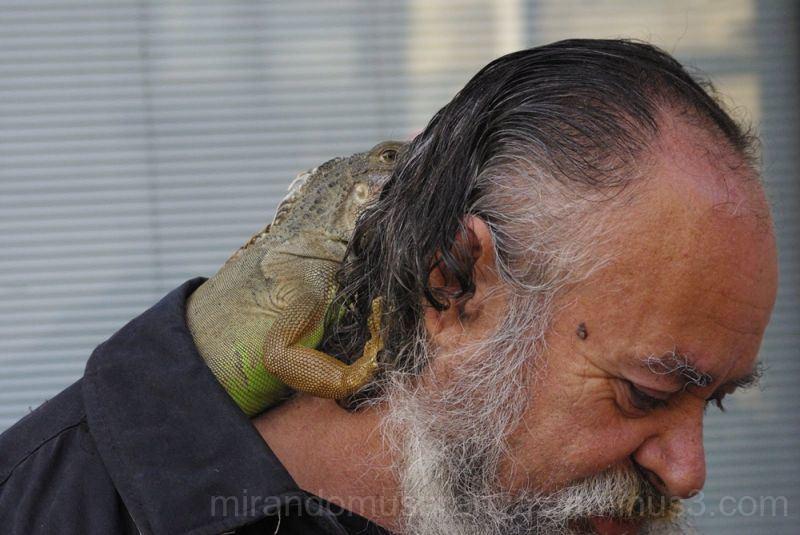 El hombre de la Iguana