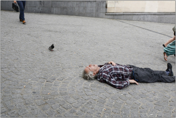 Le pigeon sous la canicule