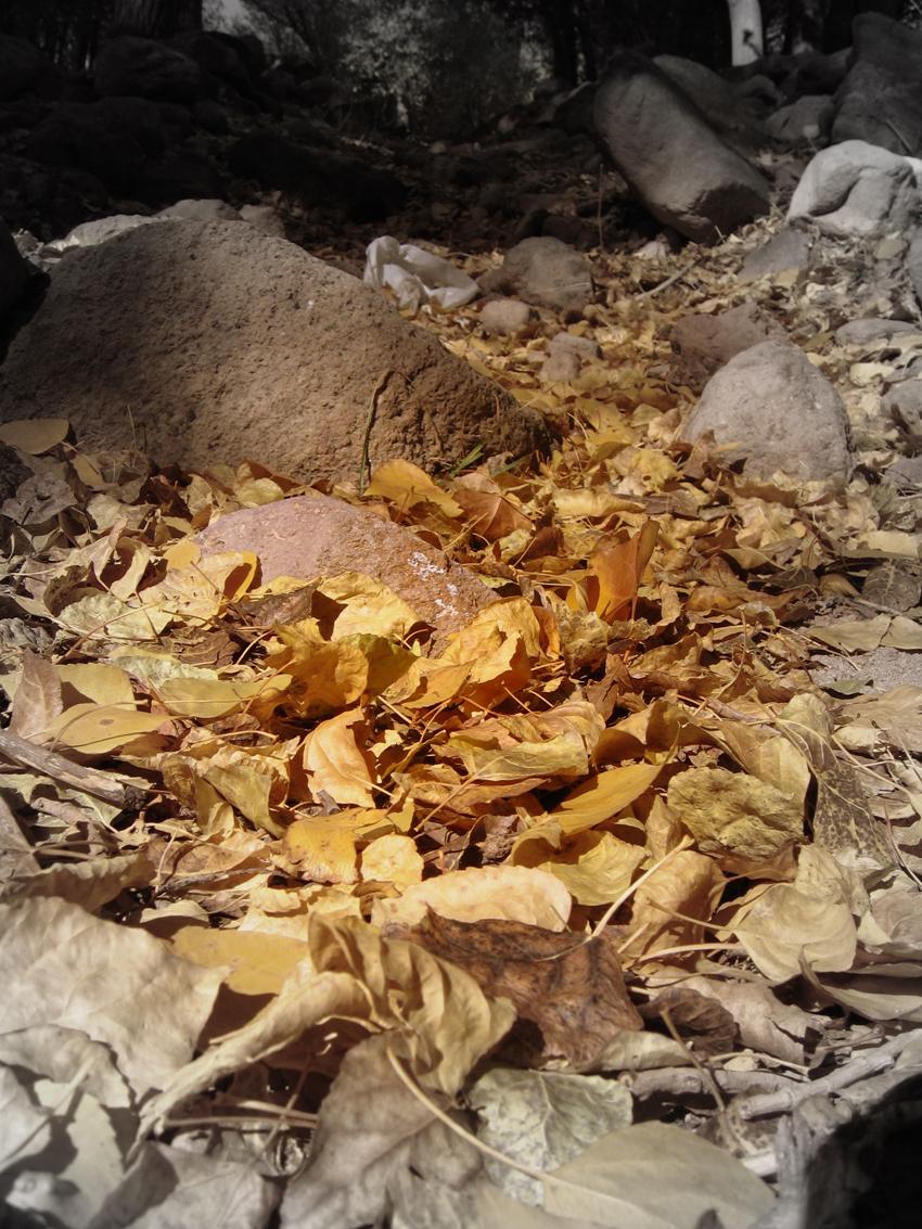 sahand, tabriz, autumn, fall