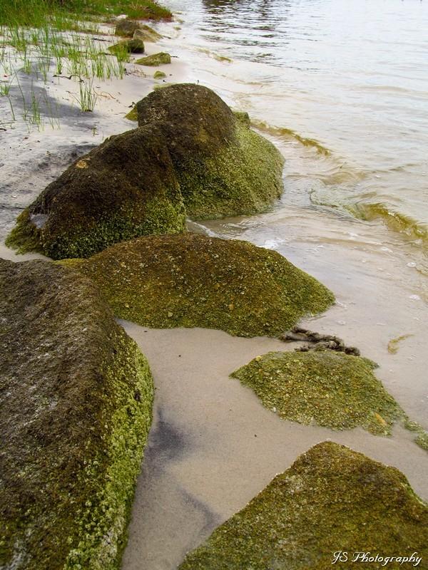 Indian River Shoreline